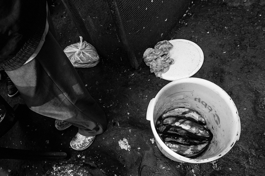 Der Fisch ist auch mein Freund II, eine Fotoserie von Antje Kroeger