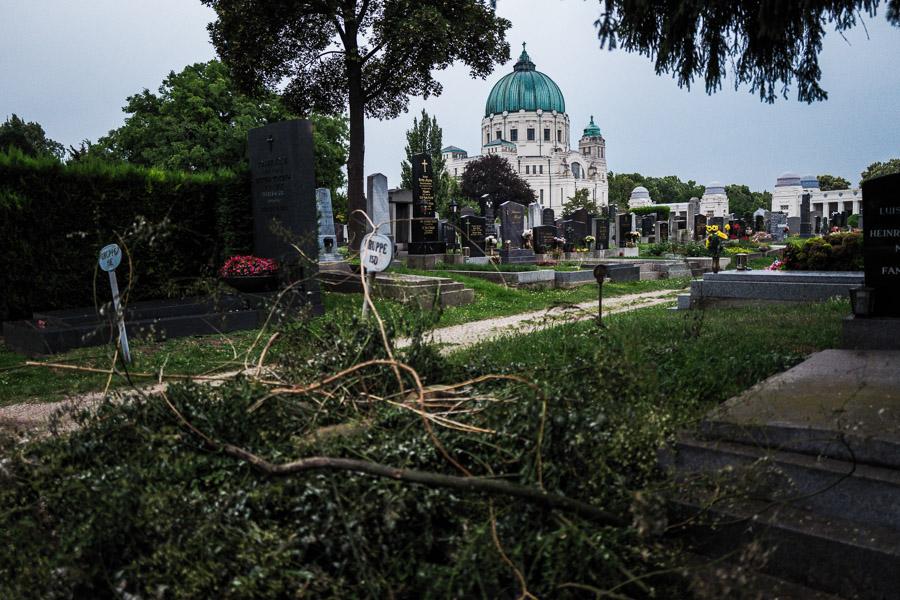 Wien - Zentralfriedhof, Juli 2018
