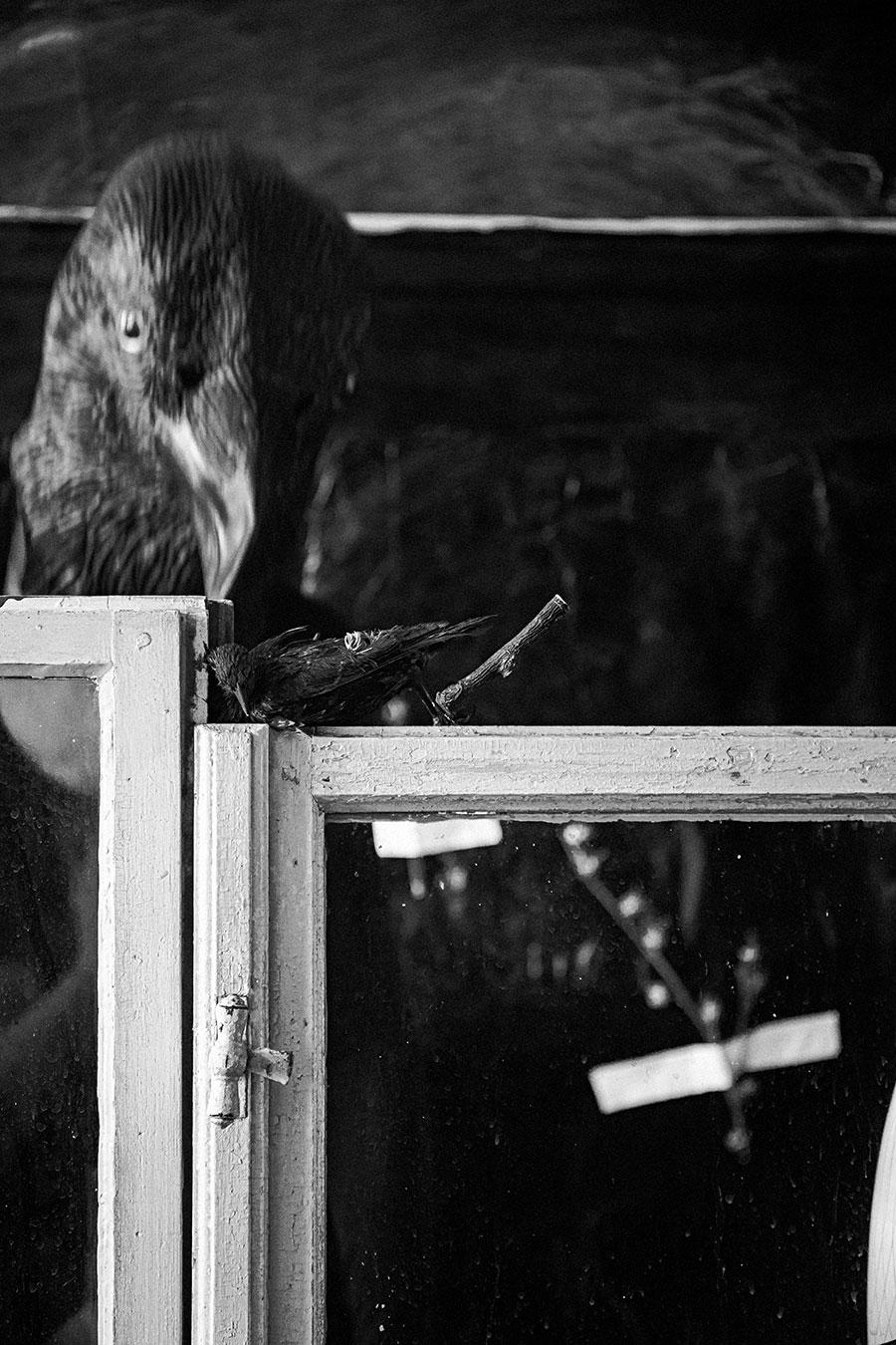 hinterdenfenstern_derrabe_antjekroeger4
